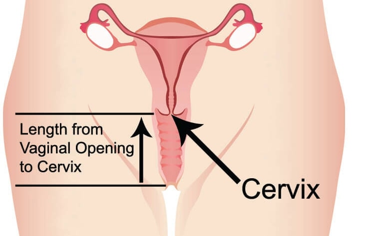 cervix - sex erogenous zone - revolutionary