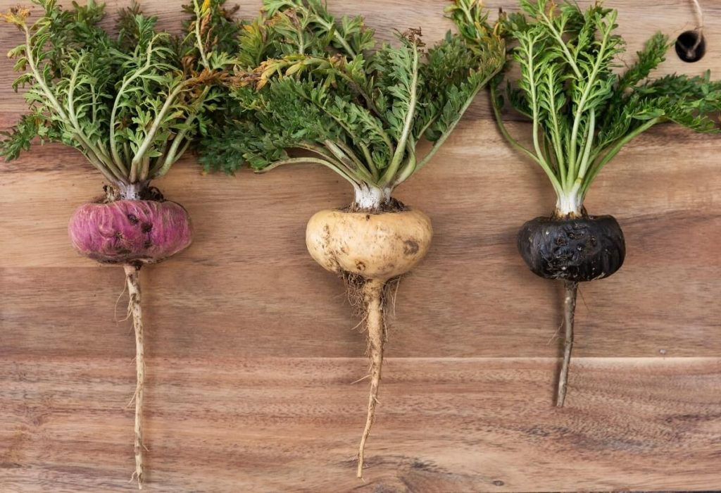types of maca root - red yellow black