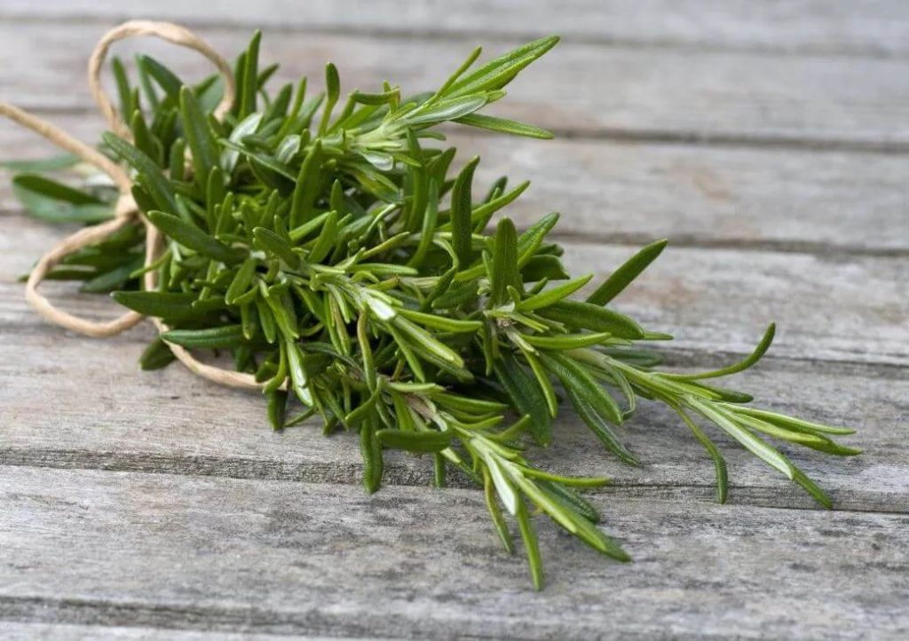 rosemary-leaves-benefits-for-skin